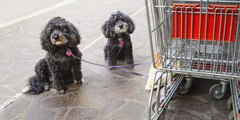 Cani fuori da un supermercato