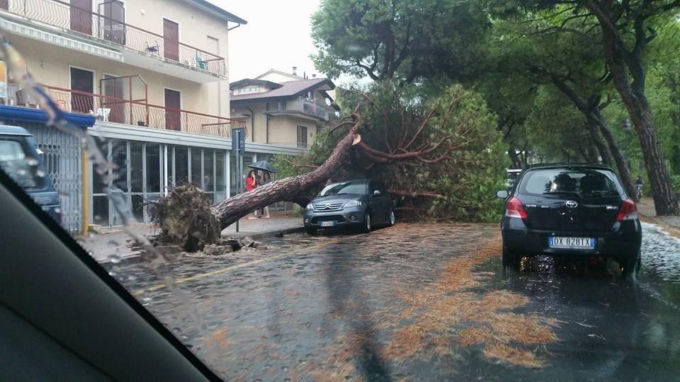 Raffiche di vento nel Veneziano: a Jesolo 'volano' alberi