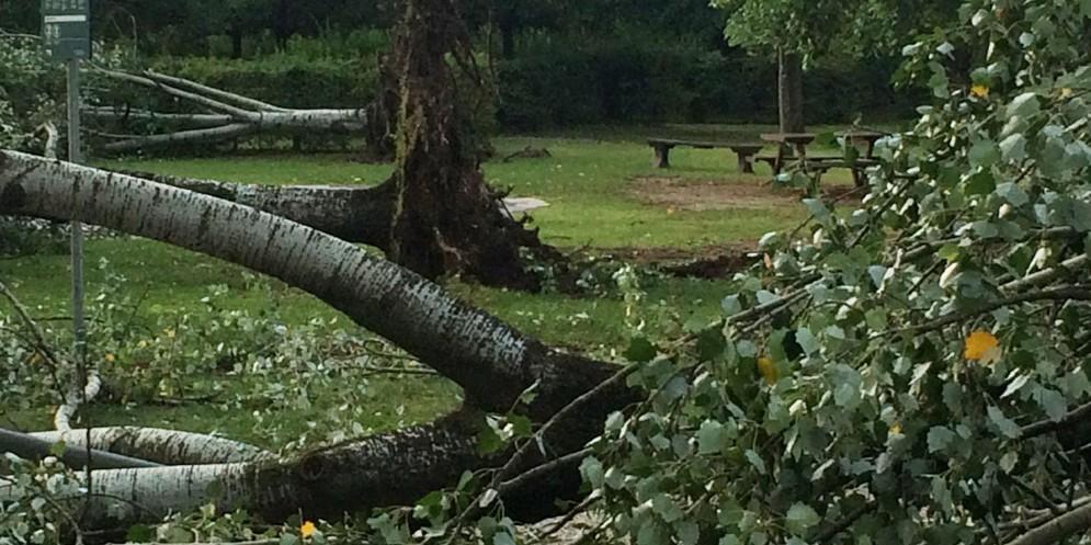 Parco del Cormor devastato dal vento (© Diario di Udine)