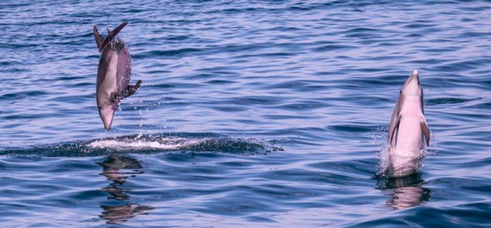 Lo show dei delfini