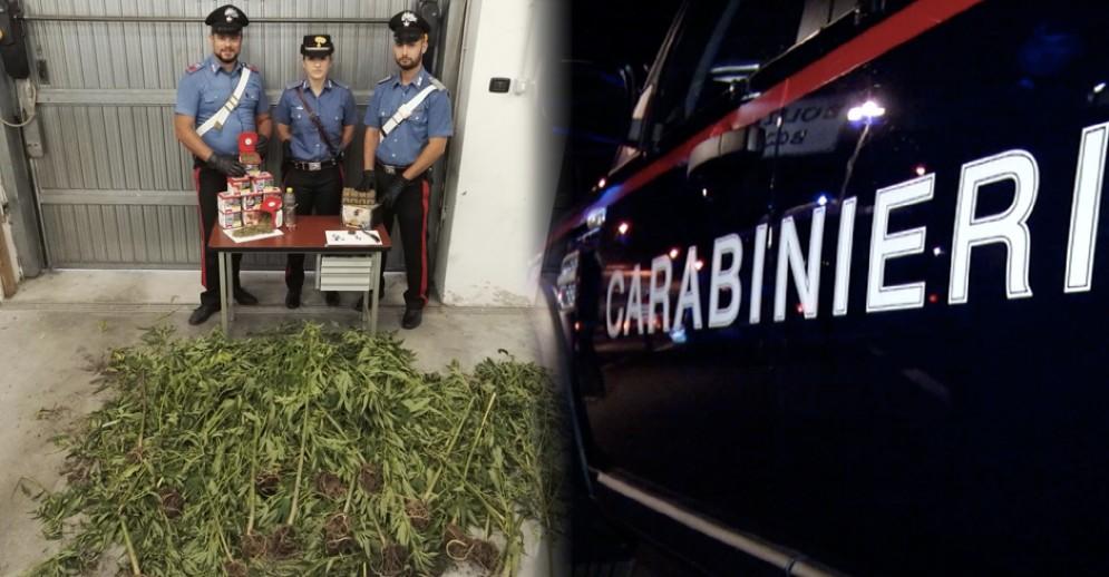 Le piante di marijuana