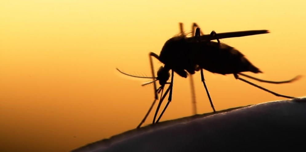 Virus Zika, c'è stato un caso a Faenza