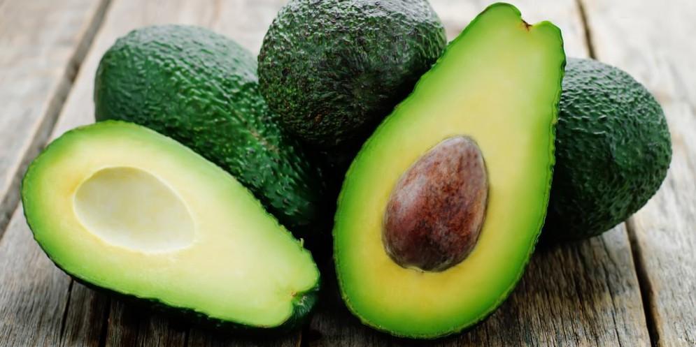 Avocado, dai semi si ricavano preziose sostanze benefiche