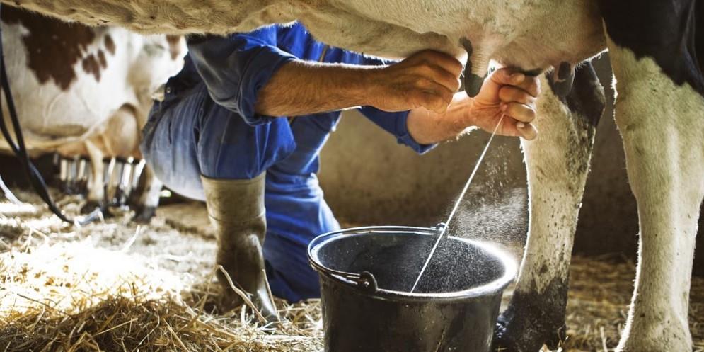 Latte non pastorizzato mette a rischio Seu, come accaduto in questi giorni nel Salento
