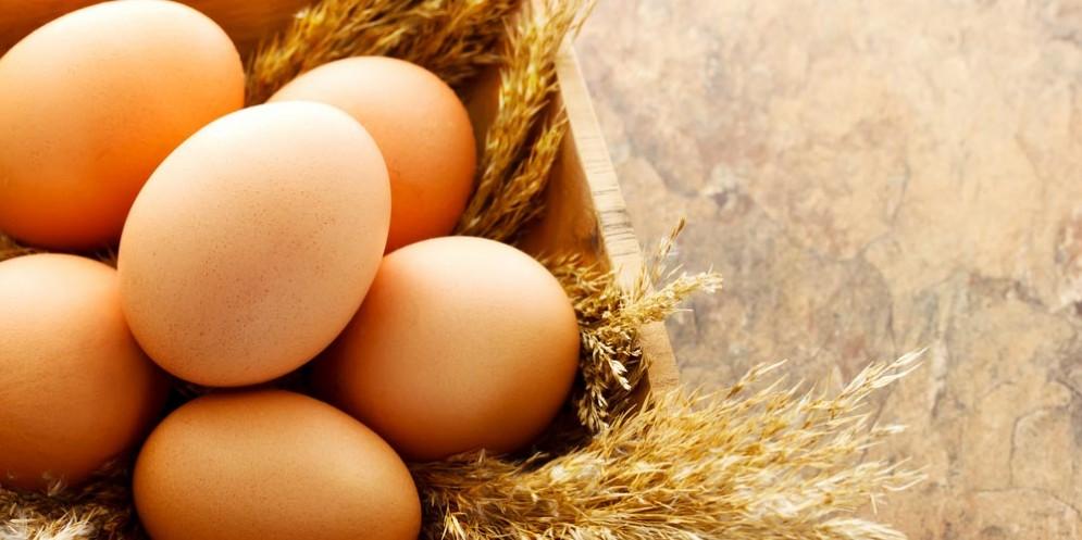 Uova al fipronil, proseguono i controlli a tappeto