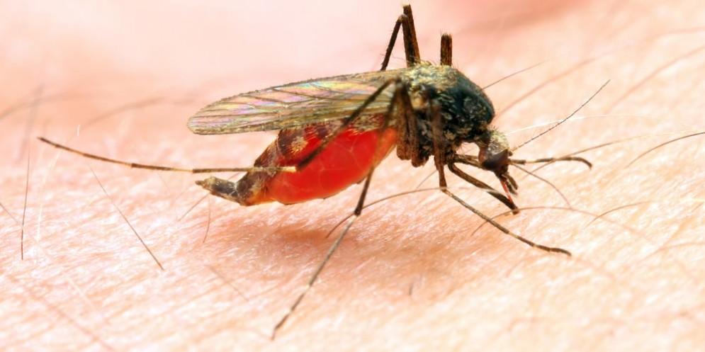 Zanzara che può trasmettere la malaria