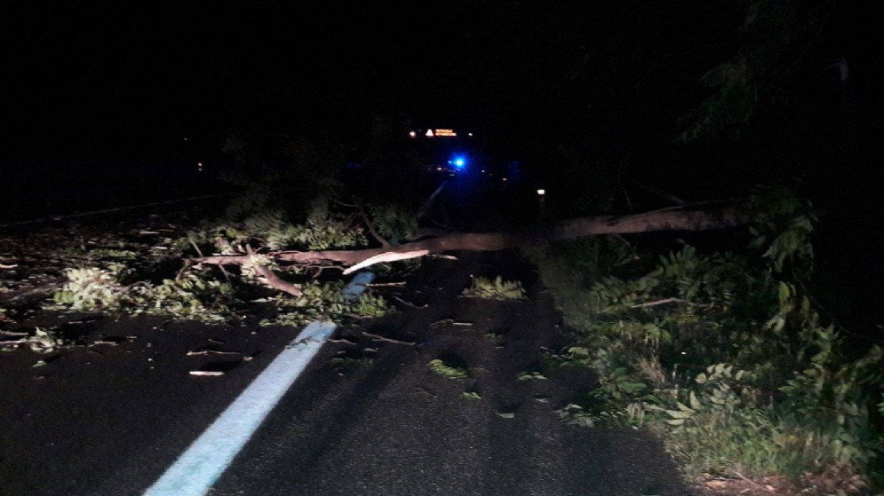 L'albero caduto lungo l'autostrada