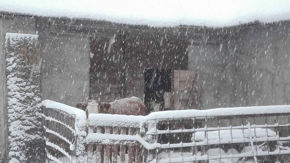 Malga Lussari coperta di neve