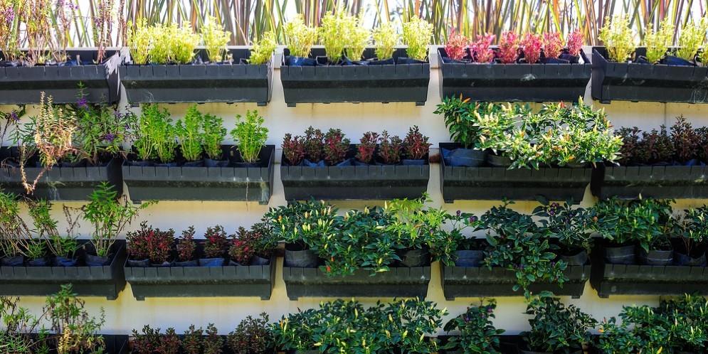 Questi ragazzi bolognesi ha ideato un orto 'smart' per terrazze e balconi in città