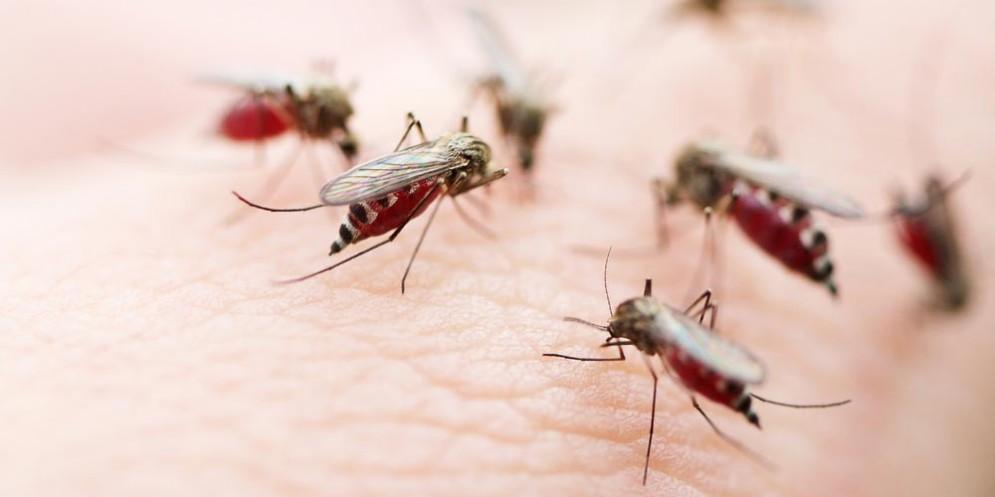 Zanzare e Chikungunya