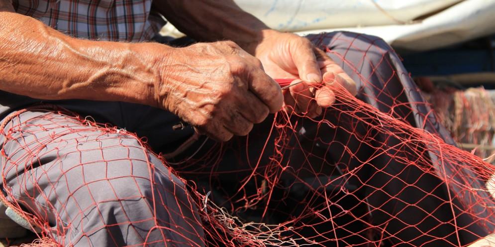 Itticoltura: Shaurli, indennizzi per le aziende colpite da gelate