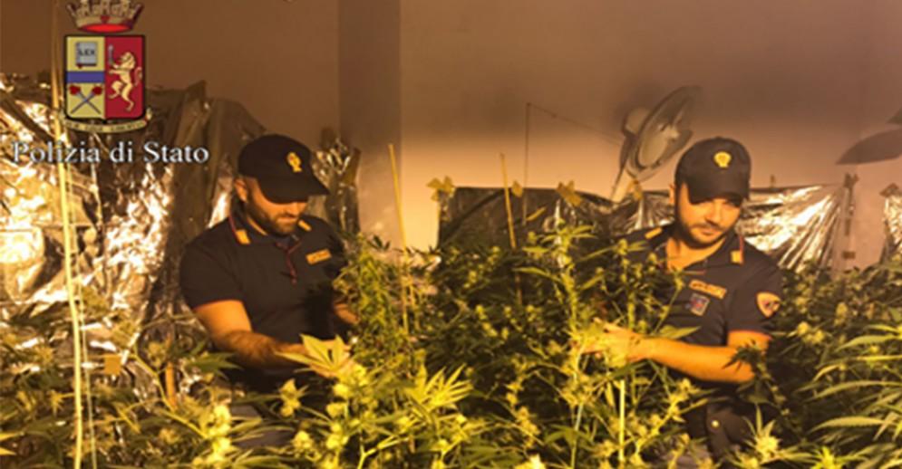 Coltivazione di marijuana in appartamento in Barriera di Milano