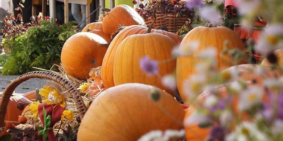Gli eventi in programma domenica 8 ottobre