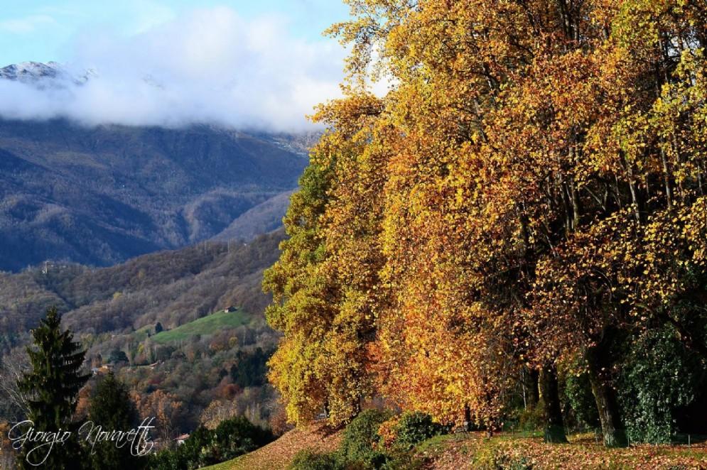 I colori dell'autunno in Burcina