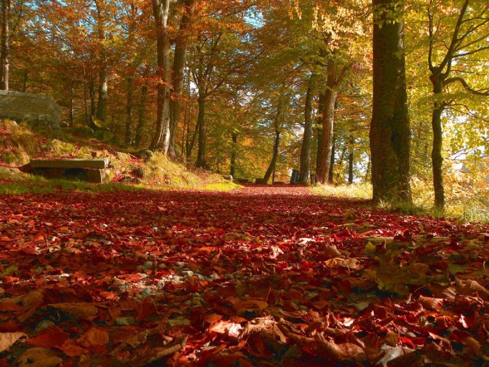 Foliage alla passeggiata dei preti