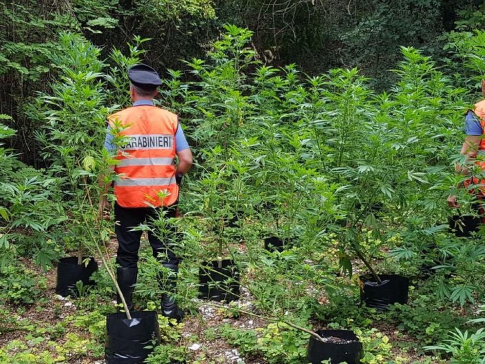 Sequestrati 10 kg di Marijuana a Padova