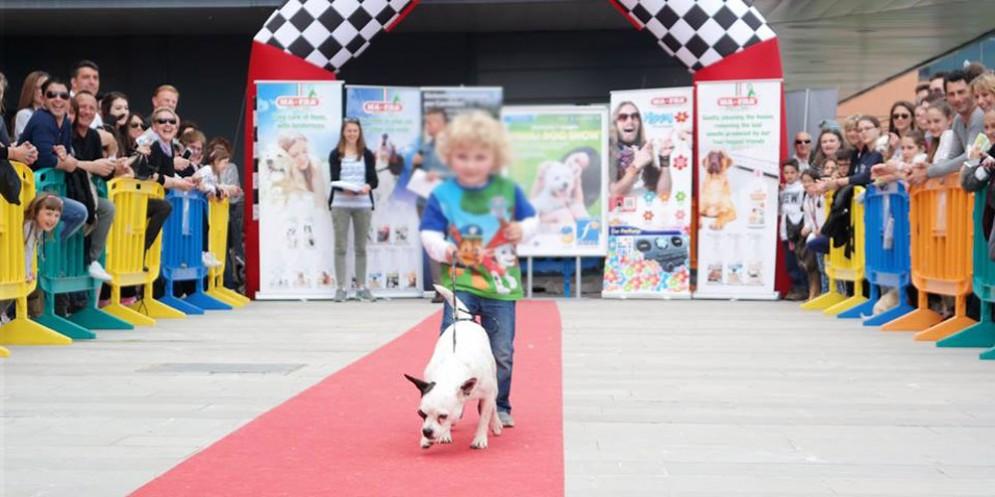 A Rivignano arriva una nuova sfilata per cani