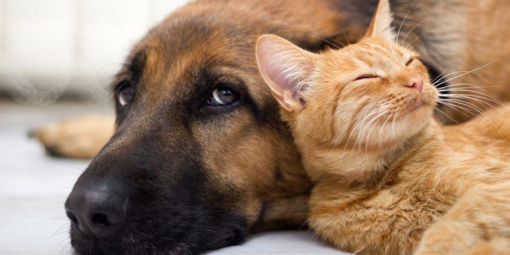 I cani sono più cervelloni dei gatti