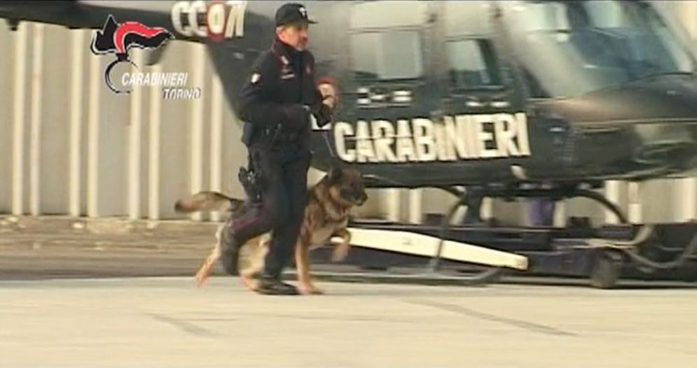 Infallibile Quark, il cane antidroga dei carabinieri