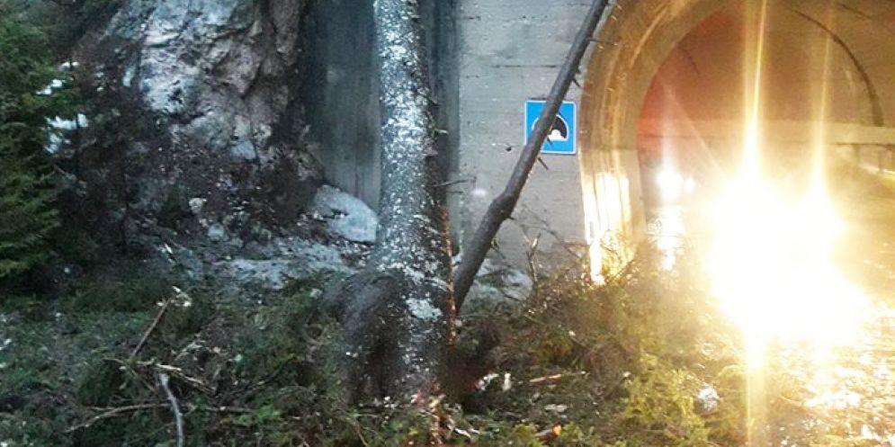 Uno degli alberi caduti in Canal del Ferro