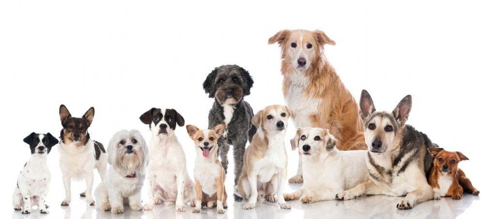 Per i proprietari di cani la gamma di servizi di test del DNA disponibili sul mercato è ora più ampia che mai