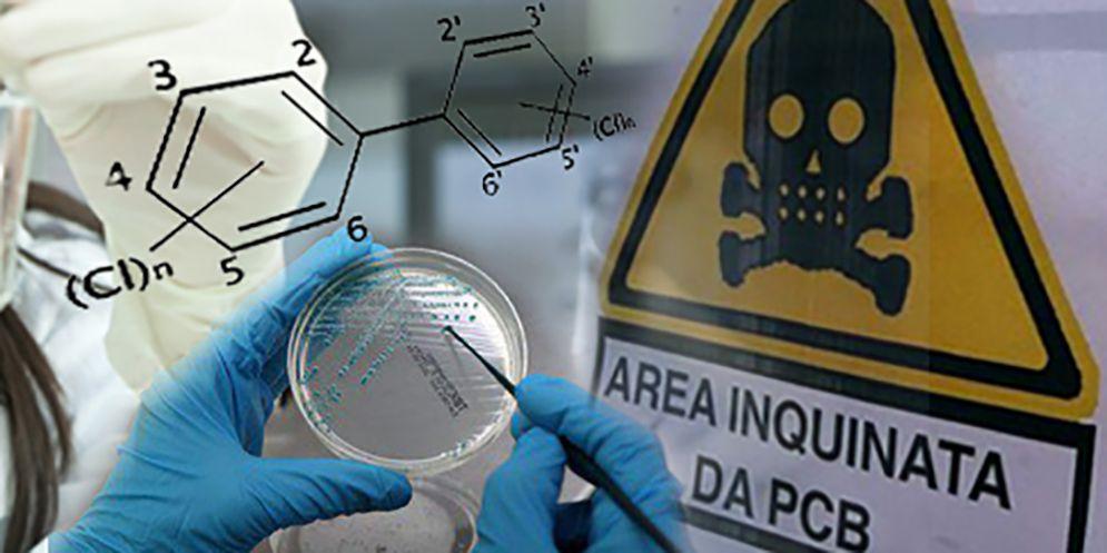 Analisi dei policlorobifenili a Maniago: tecniche diverse ma nessun rischio