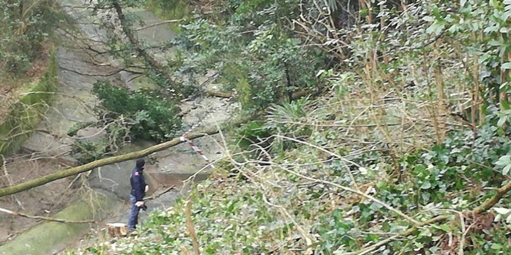 Giallo in un bosco del goriziano: trovato uno scheletro umano