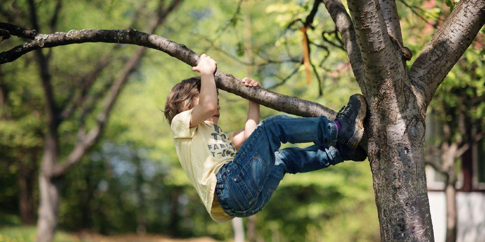 Vietato arrampicarsi sugli alberi: multati due ragazzi