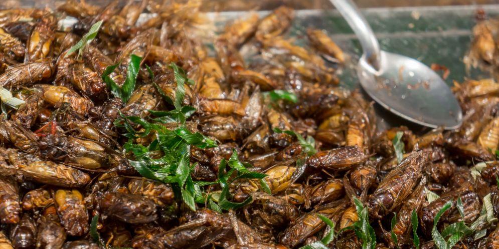 L'alimentazione cambia. Idroponica, alghe, insetti: Acquafarm fa chiarezza