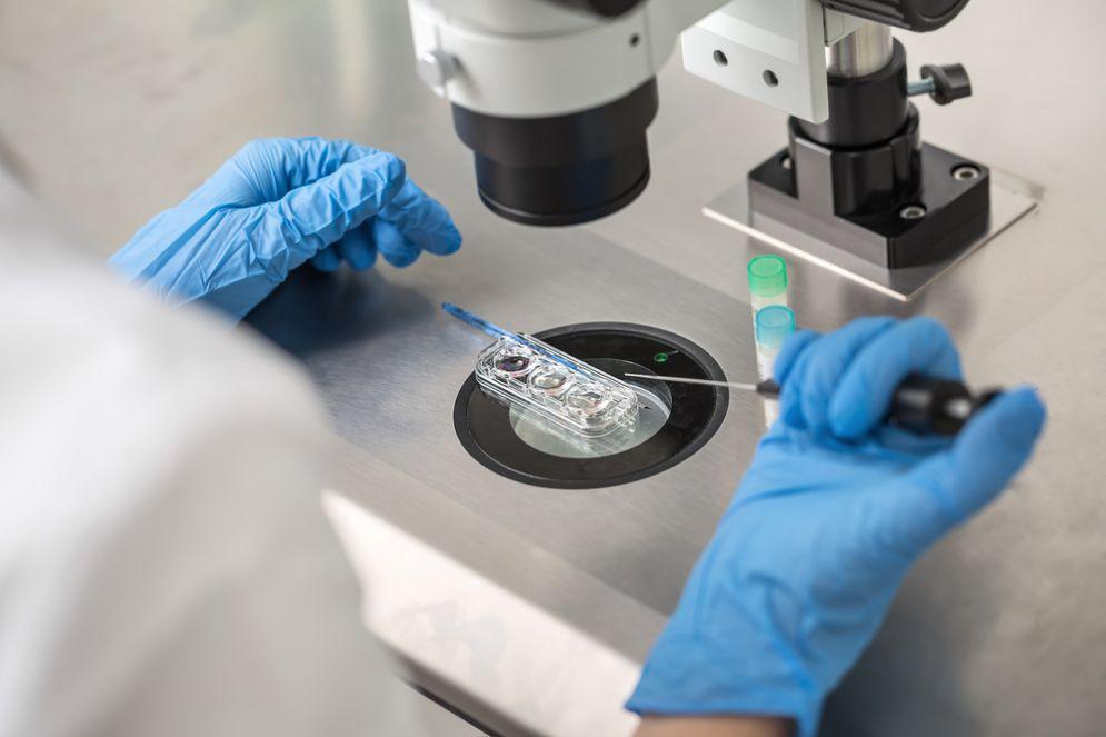 Scienziati trovano la soluzione per far sviluppare gli ovociti in laboratorio