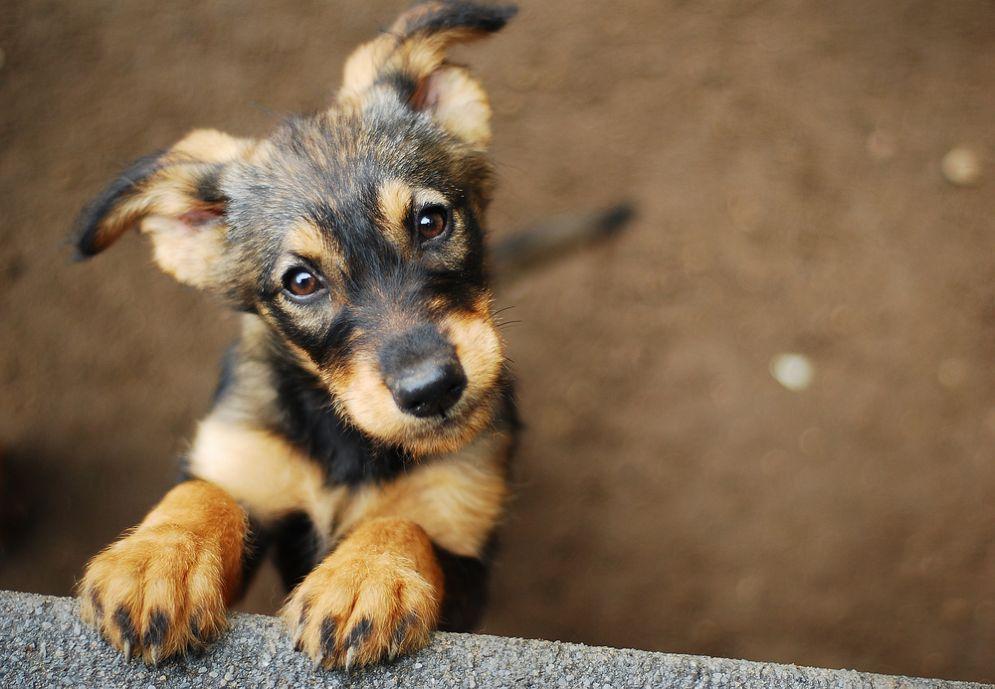 I cani per la lotta contro il cancro