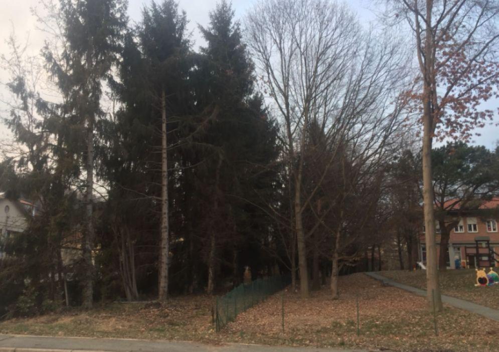 Gli alberi che saranno abbattuti