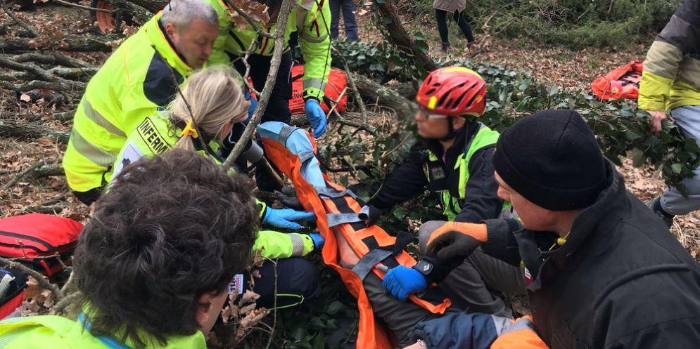 Sgonico: boscaiolo resta ferito dopo essere stato travolto da un albero