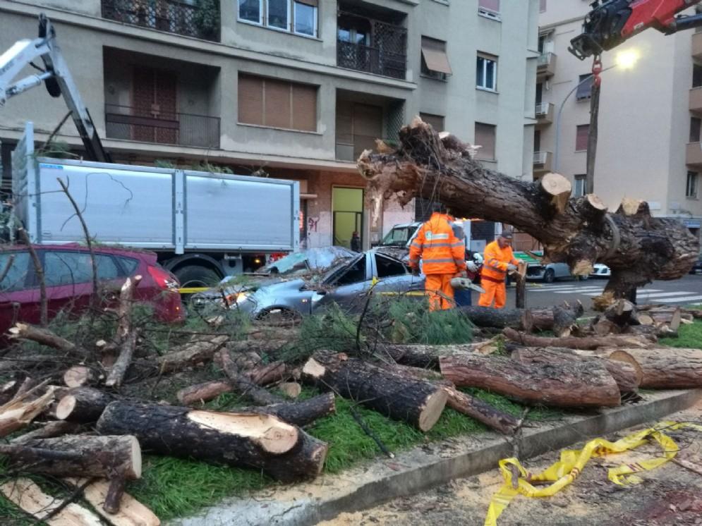 L'intervento dei tecnici solo dopo la caduta dell'albero che ha distrutto una macchina