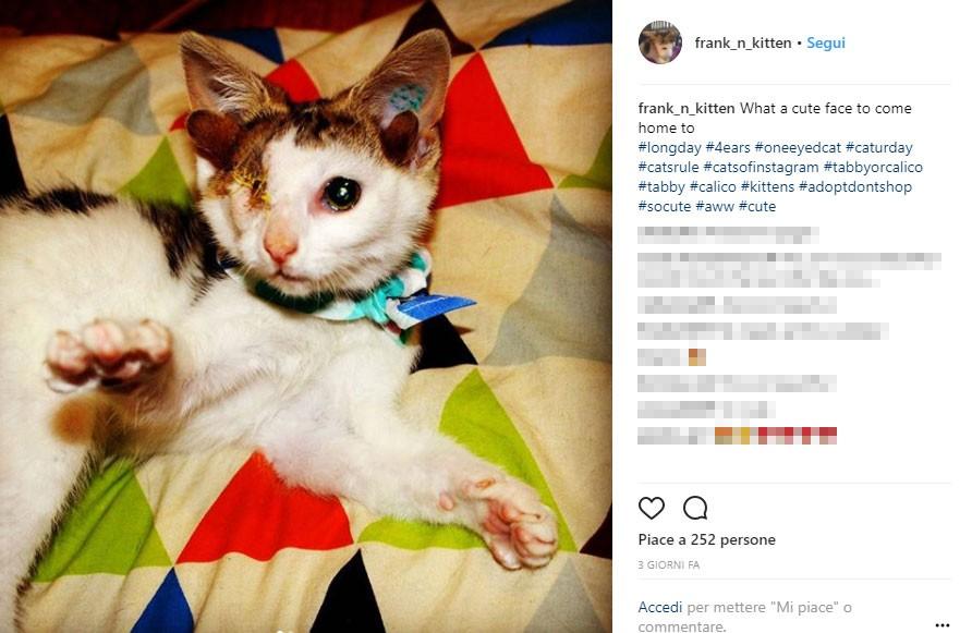 I veterinari hanno dovuto asportargli un occhio a causa di una grave infezione