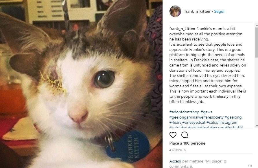 Il volontario che lo ha salvato ha detto che è un gatto talmente speciale da cui non ci si può separare