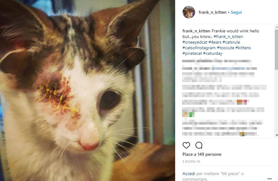 «Ho ospitato più di 80 gatti nell'ultimo anno, ma con lui è stato diverso. Non ho nessuna intenzione di separarmi da lui», ha raccontato Geordi.