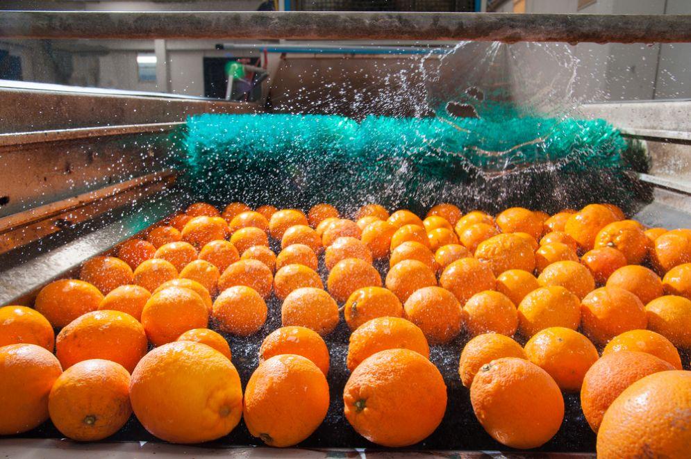 La Sicilia cerca idee per innovare la filiera agrumicola