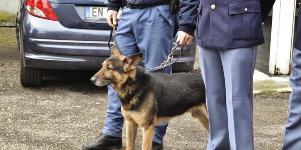 Cane dell'unità cinofila della Questura di Genova