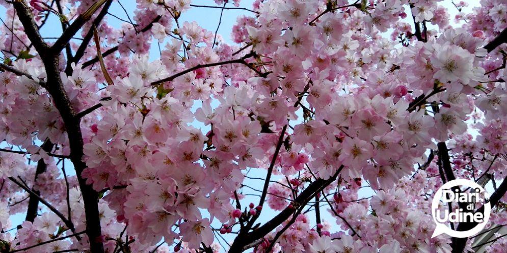 Benvenuta Primavera: nonostante il clima, è tempo di equinozio!