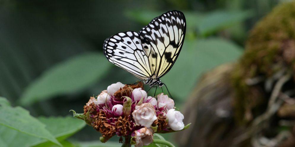 Riapre la Casa delle Farfalle di Bordano