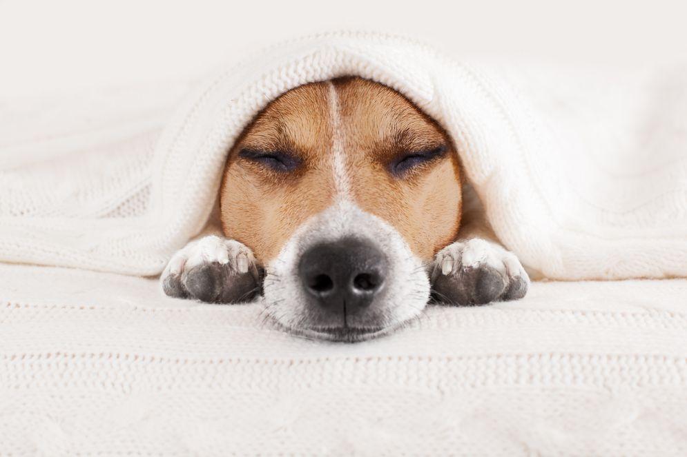 Un cane salva la padrona dal cancro