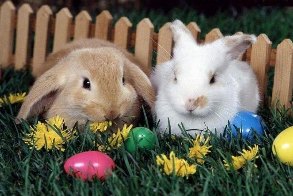 Gli eventi in programma a Pasqua e Pasquetta