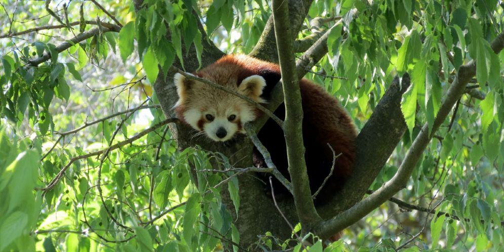 Riparte la stagione al Parco Zoo Punta Verde di Lignano