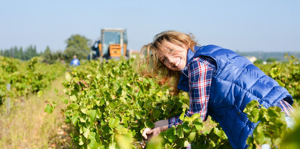 Novità sulla viticoltura nel territorio