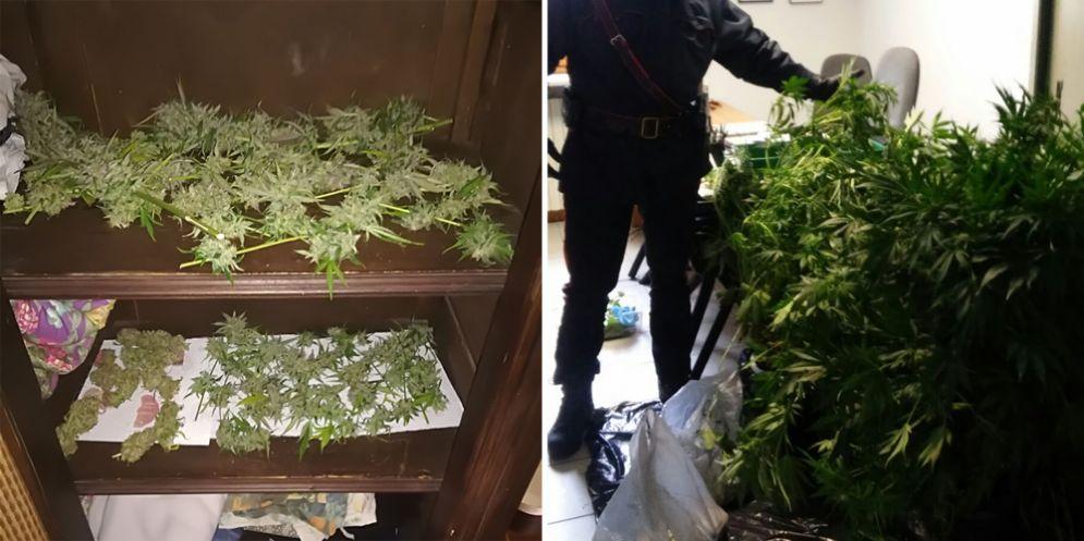 Aveva 4 serre di marijuana in casa, sequestrata droga per circa 20 mila euro: 37enne in manette