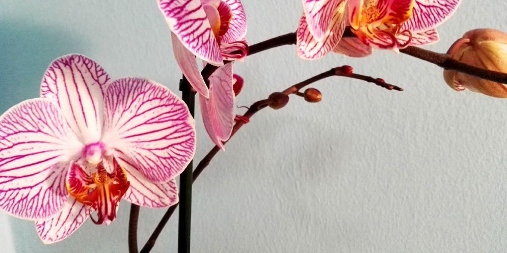 La Riserva di Cornino accompagna i visitatori alla scoperta delle orchidee più belle