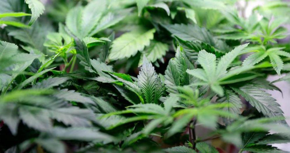 Trovati 20 kg di marijuana e 1 etto di hashish