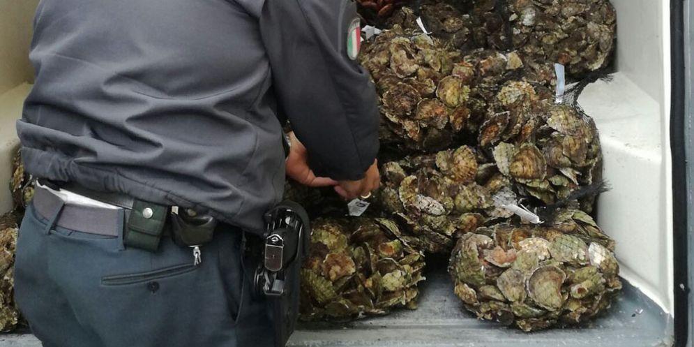Trieste: scoperto un traffico illecito di datteri di mare dalla Croazia verso l'Italia