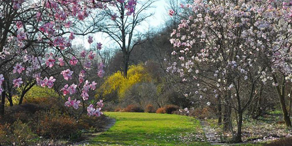 """Incontro botanico al Giardino Viatori, """"Il nuovo giardino provenzale: dove la tradizione incontra la modernità"""""""